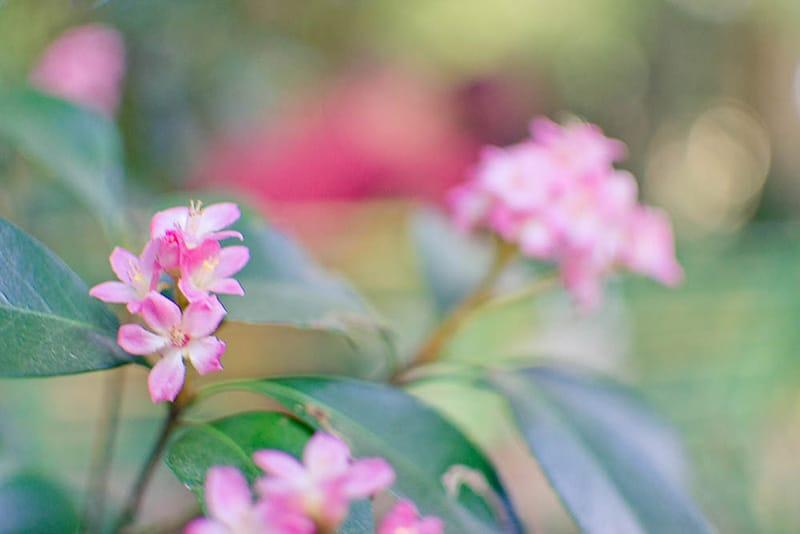 SpringEngagement_ErnaLoockPhotography-20-2