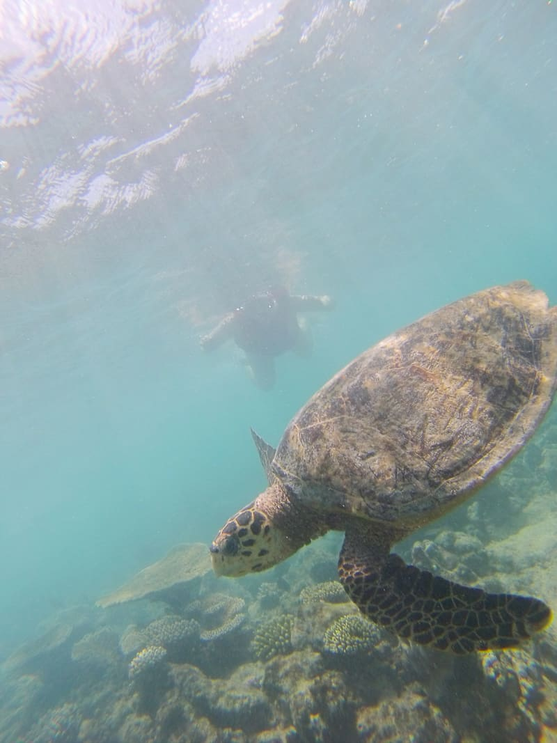 GoPro Turtles in the Maldives with kuoni Travel