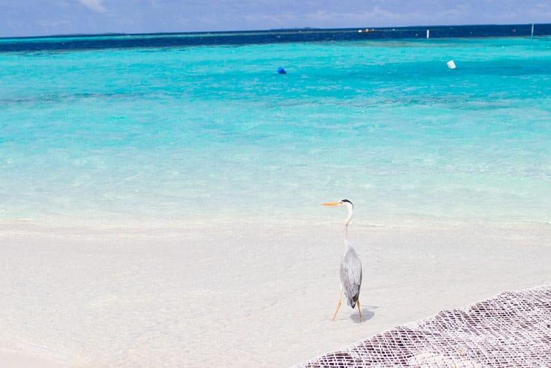 Maldives Photos-26