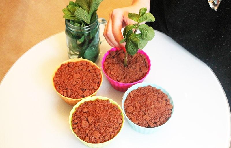Banoffee Dessert Plant Fun Unique Favors DIY Pudding 4