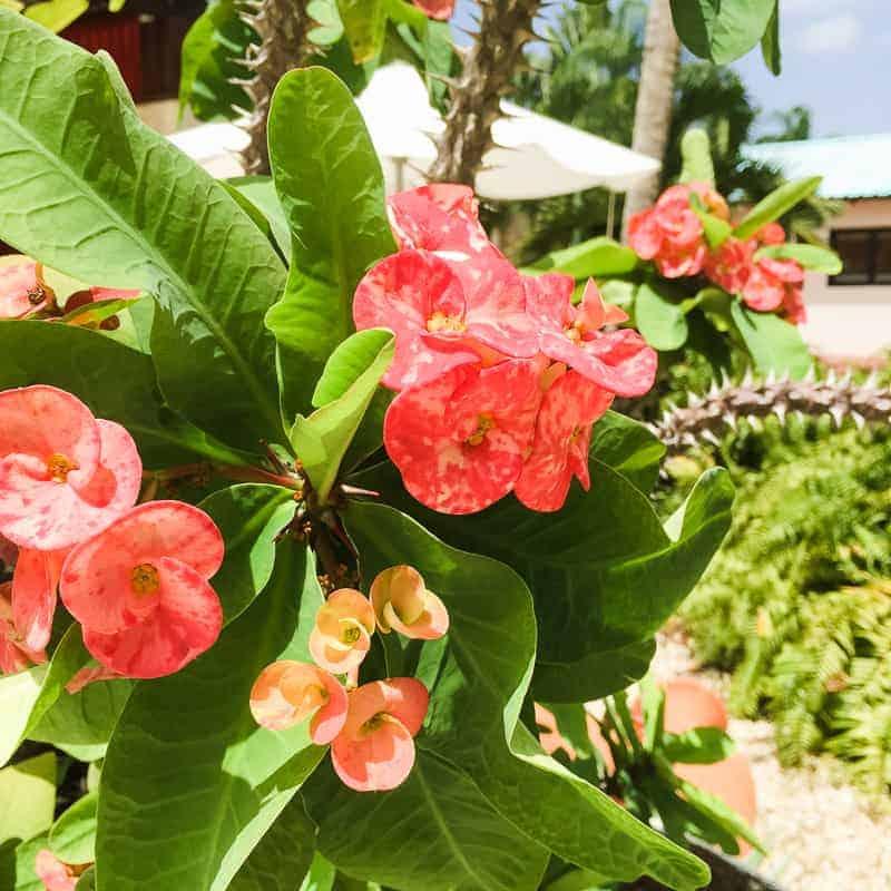 Dominican Republic La Romana Travel Guide Visit honeymoon holiday-116
