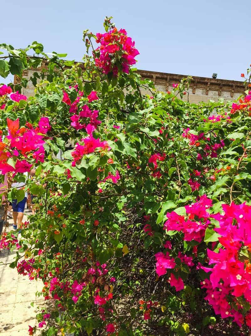 Dominican Republic La Romana Travel Guide Visit honeymoon holiday-183