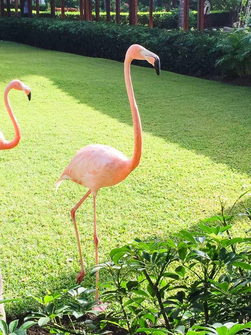 Dominican Republic La Romana Travel Guide Visit honeymoon holiday-4