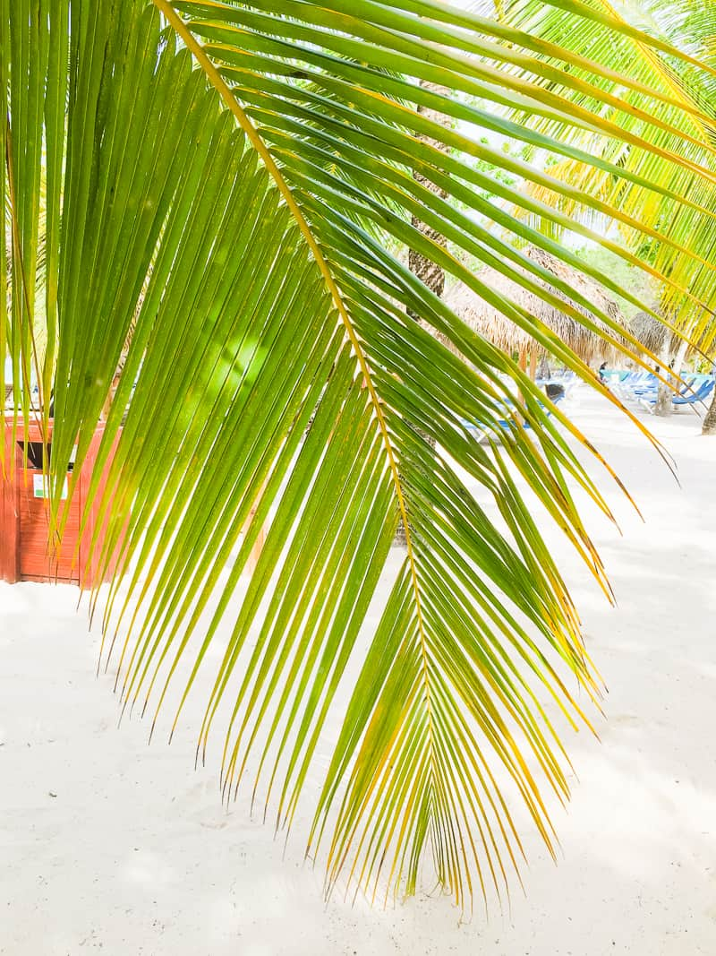 Dominican Republic La Romana Travel Guide Visit honeymoon holiday-62