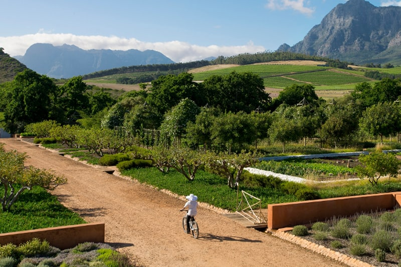 10 Unique honeymoon activities - cycle through vineyards