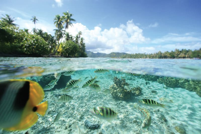 10 Unique honeymoon activities - plant a coral reef in the Maldives