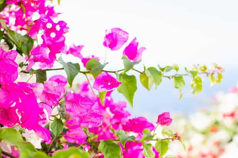 Santorini Oia Travel Guide Reccomendations Honeymoon Colourful Place Greece_-74
