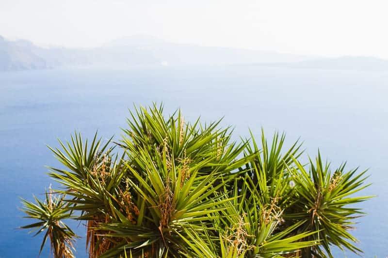 Santorini Oia Travel Guide Reccomendations Honeymoon Colourful Place Greece_-79