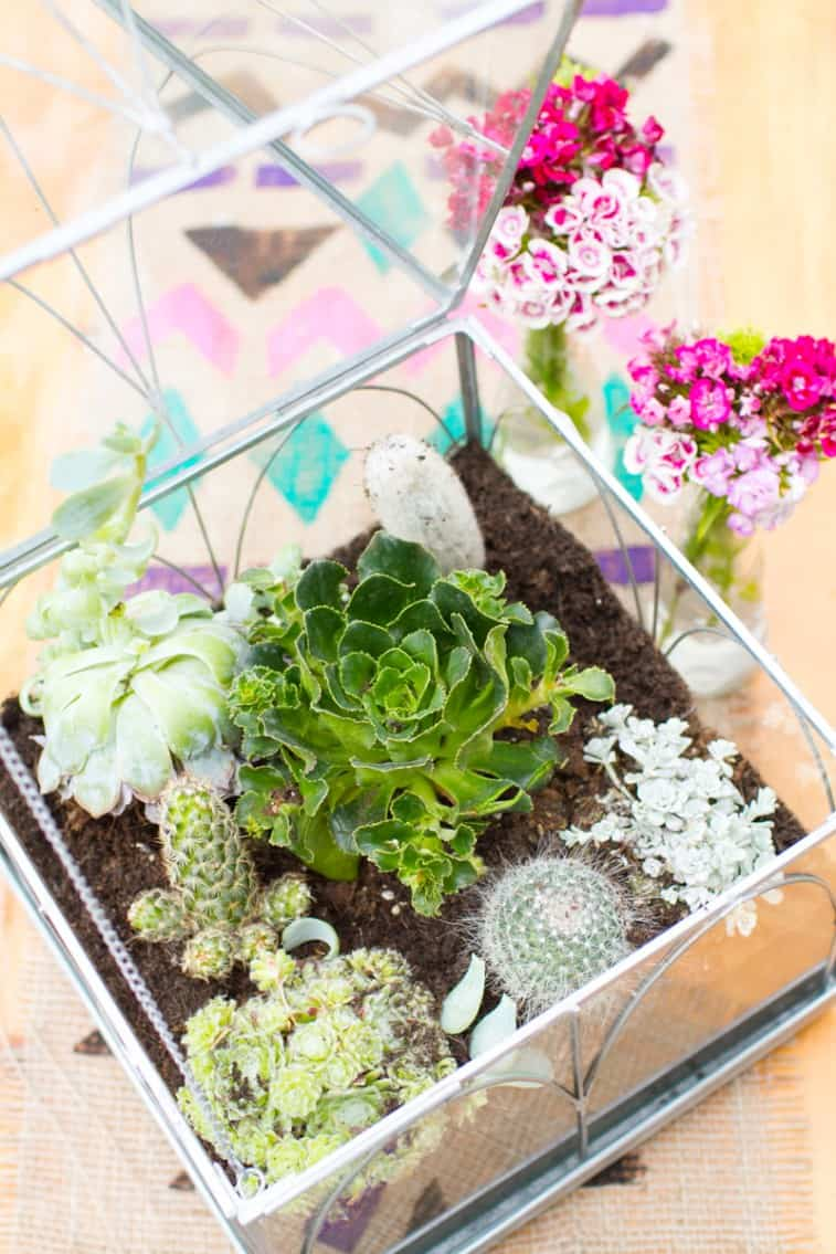 Make your own terrarium Centrepiece