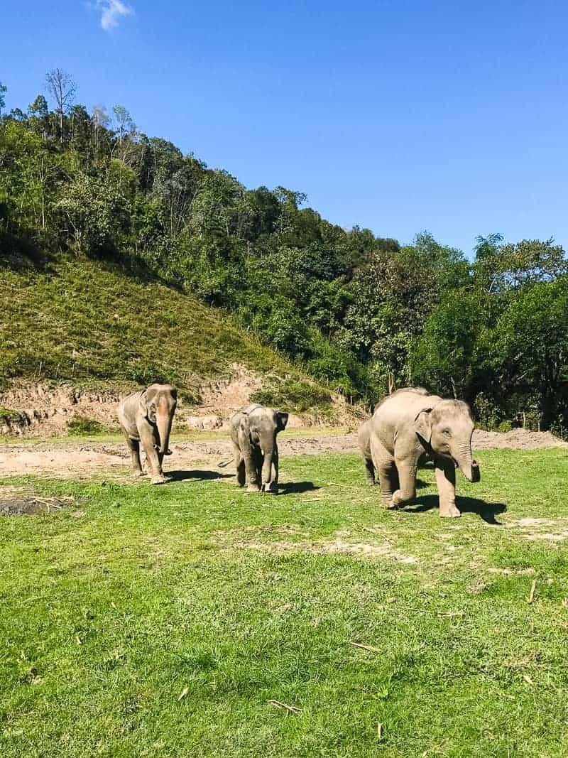 Elephant Jungle Santuary Chang Mai Thailand Ethical Sustainable Eco-Tourism Welfare-13