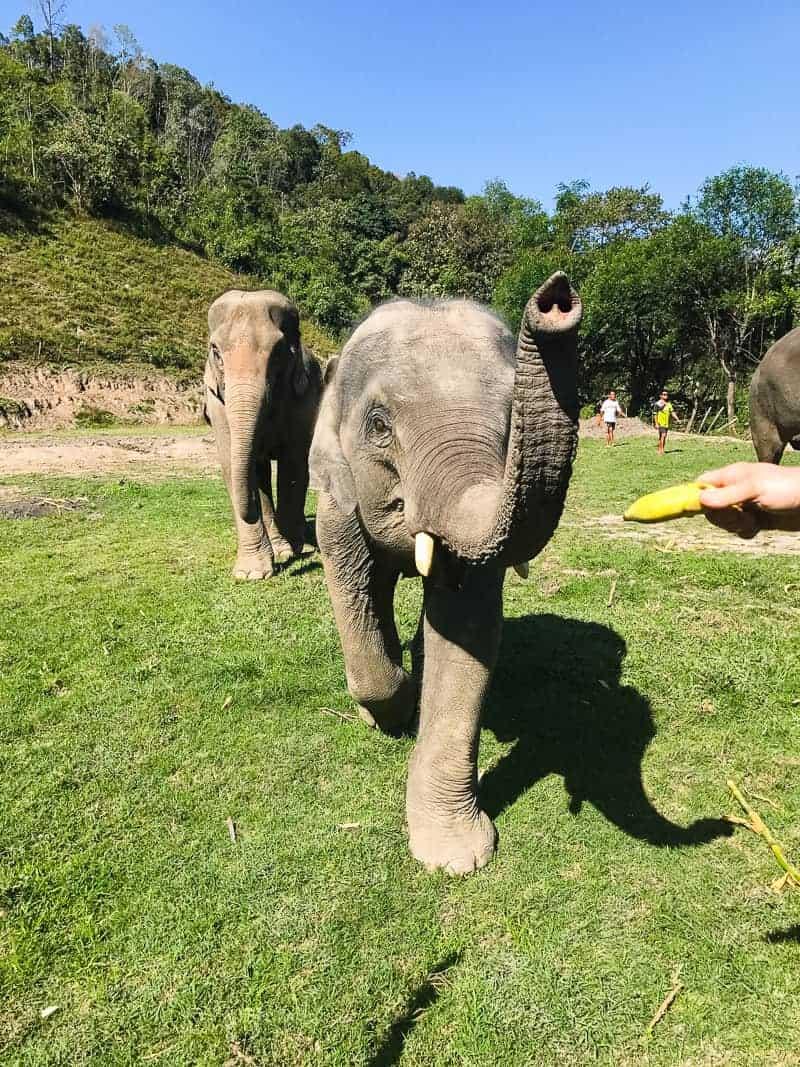 Elephant Jungle Santuary Chang Mai Thailand Ethical Sustainable Eco-Tourism Welfare-14