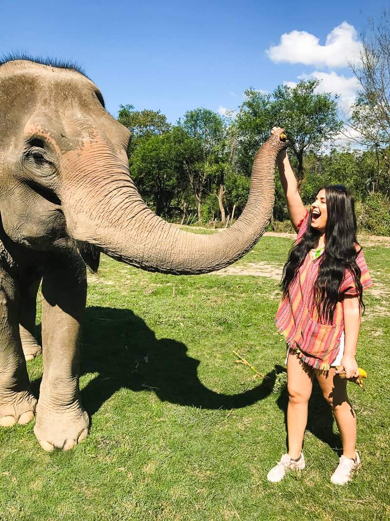 Elephant Jungle Santuary Chang Mai Thailand Ethical Sustainable Eco-Tourism Welfare-18