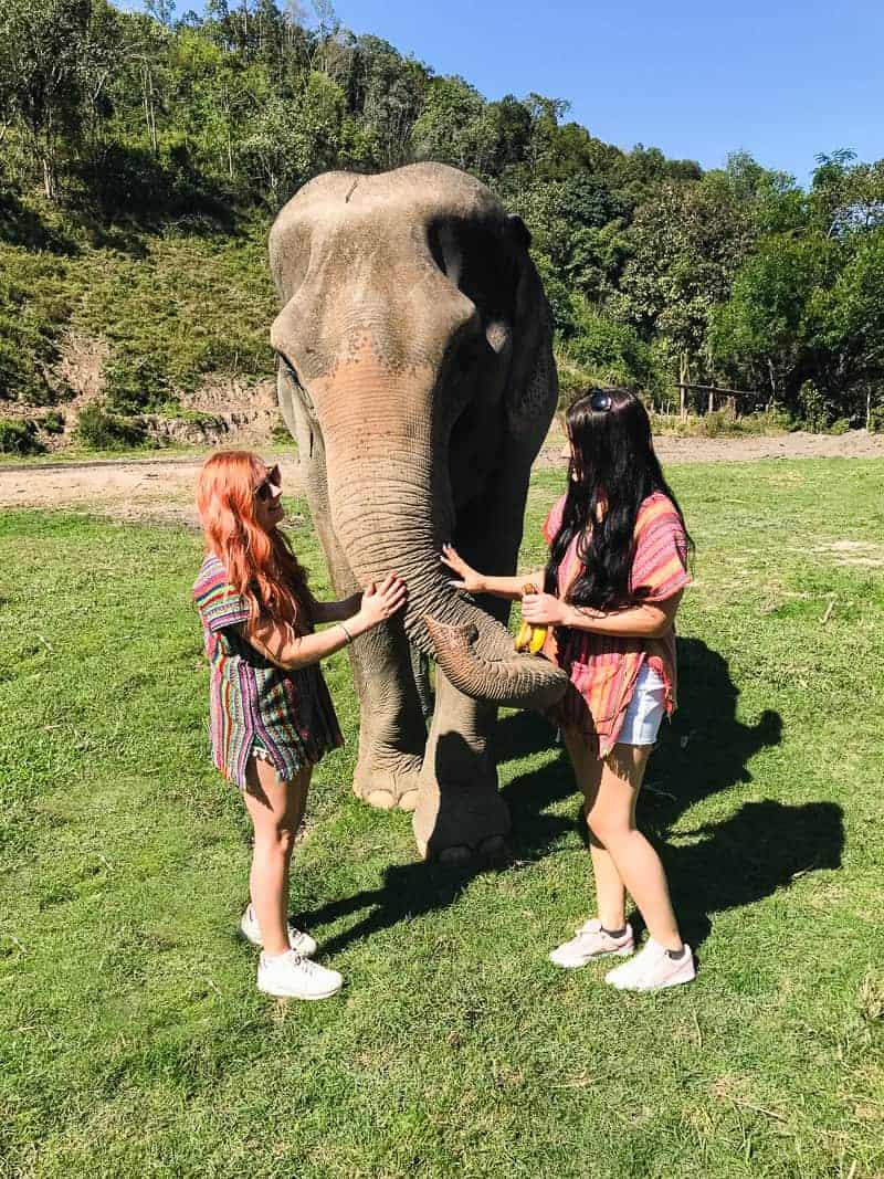 Elephant Jungle Santuary Chang Mai Thailand Ethical Sustainable Eco-Tourism Welfare-21
