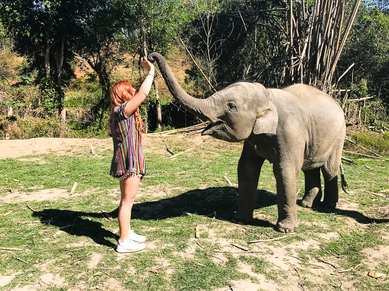 Elephant Jungle Santuary Chang Mai Thailand Ethical Sustainable Eco-Tourism Welfare-23