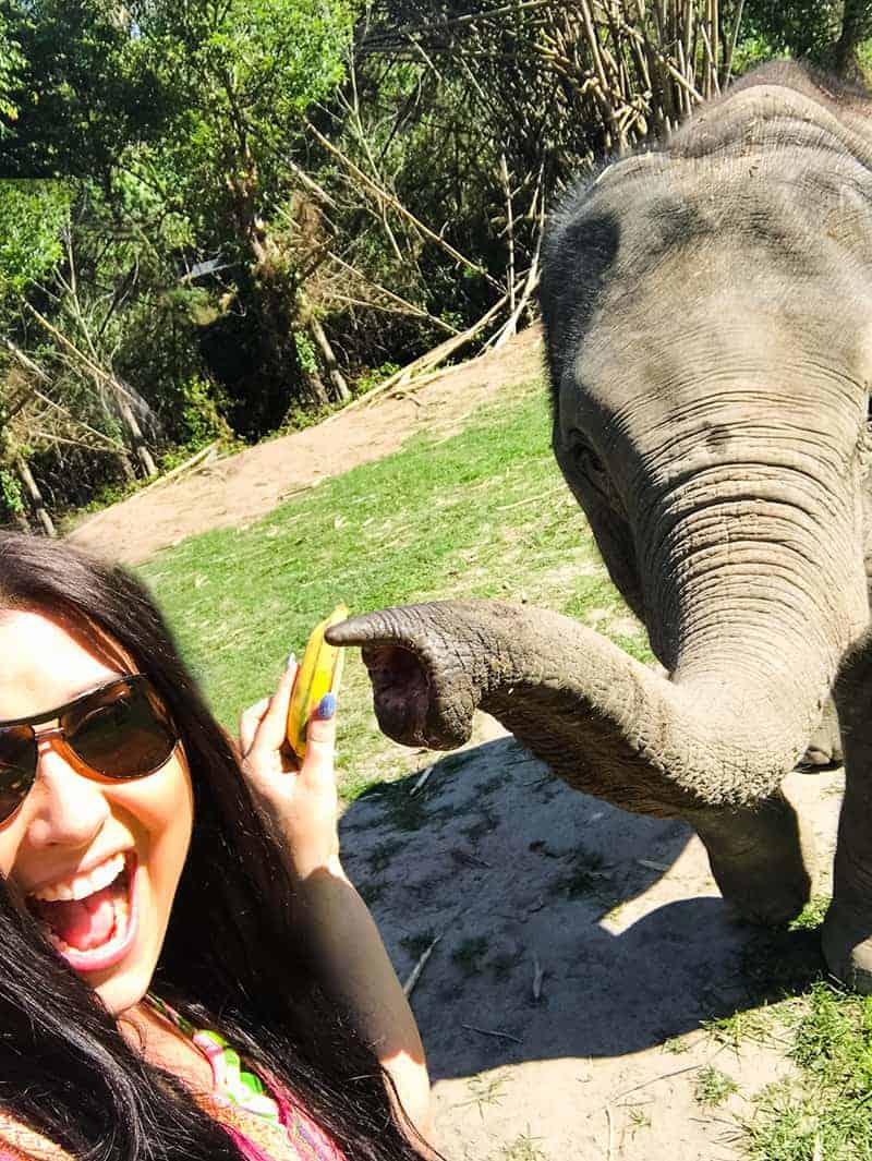 Elephant Jungle Santuary Chang Mai Thailand Ethical Sustainable Eco-Tourism Welfare-31