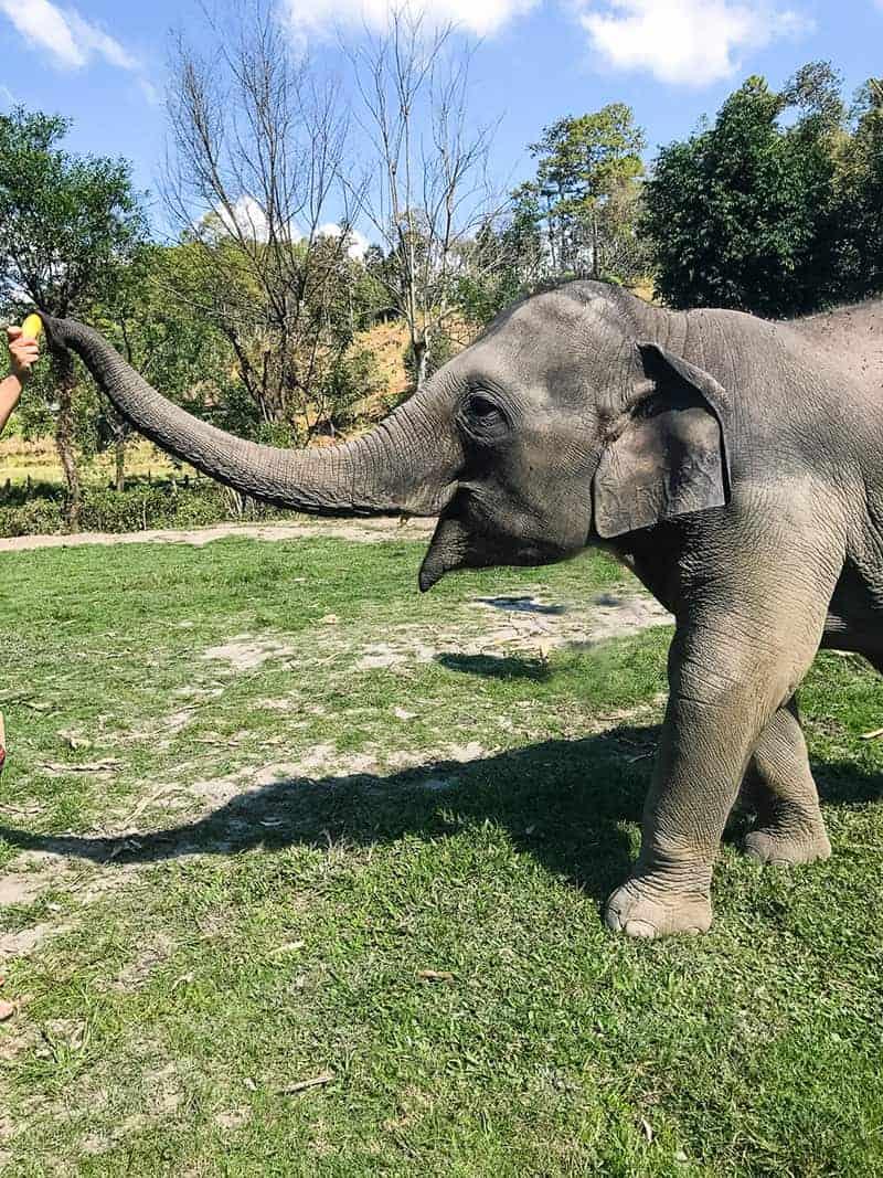 Elephant Jungle Santuary Chang Mai Thailand Ethical Sustainable Eco-Tourism Welfare-32