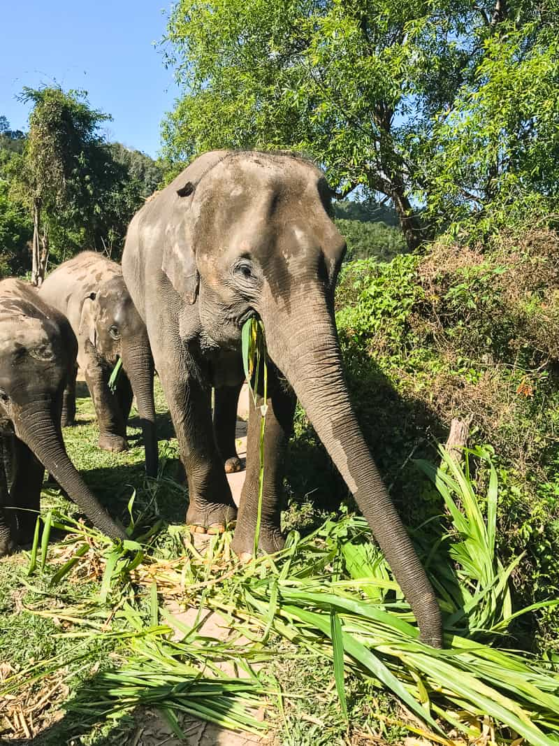 Elephant Jungle Santuary Chang Mai Thailand Ethical Sustainable Eco-Tourism Welfare-45