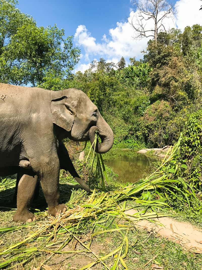 Elephant Jungle Santuary Chang Mai Thailand Ethical Sustainable Eco-Tourism Welfare-48