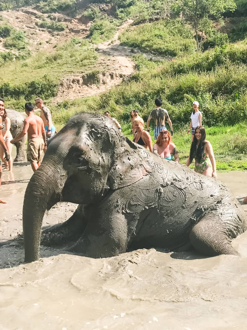 Elephant Jungle Santuary Chang Mai Thailand Ethical Sustainable Eco-Tourism Welfare-61