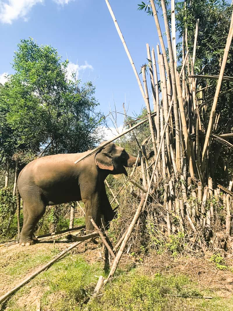 Elephant Jungle Santuary Chang Mai Thailand Ethical Sustainable Eco-Tourism Welfare-62