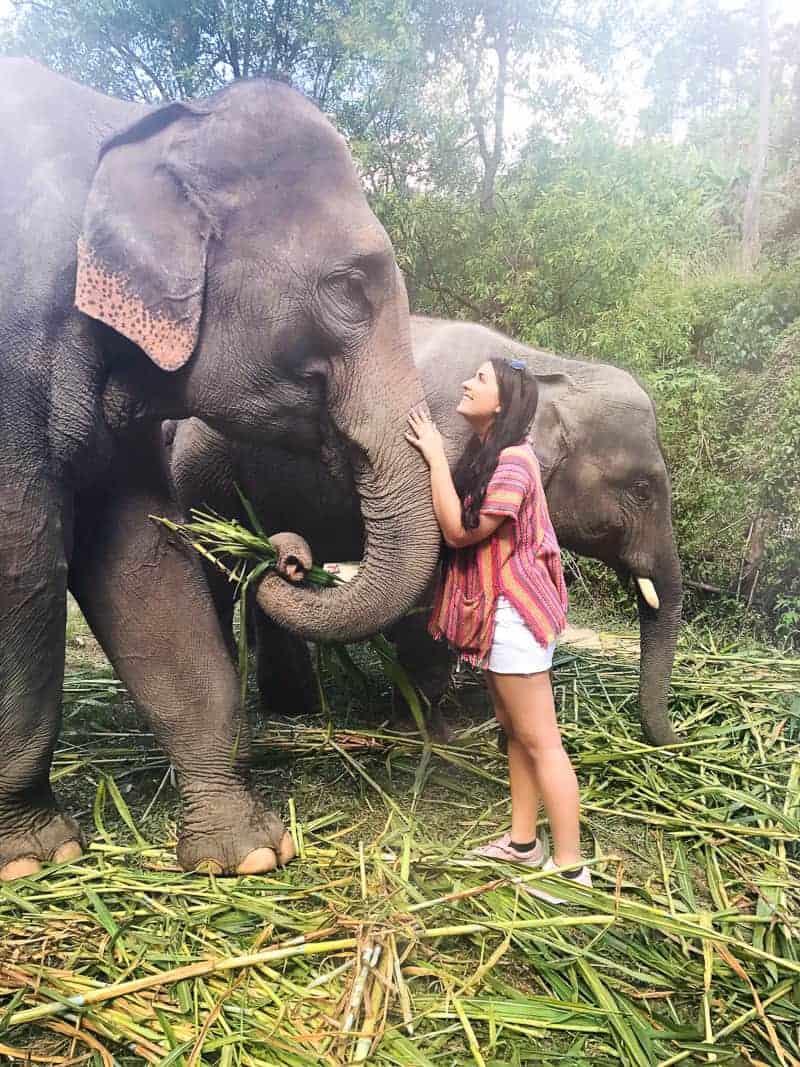 Elephant Jungle Santuary Chang Mai Thailand Ethical Sustainable Eco-Tourism Welfare-64
