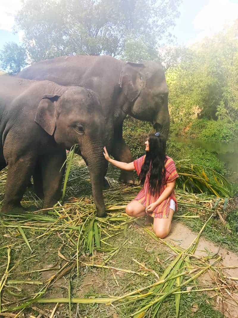 Elephant Jungle Santuary Chang Mai Thailand Ethical Sustainable Eco-Tourism Welfare-66